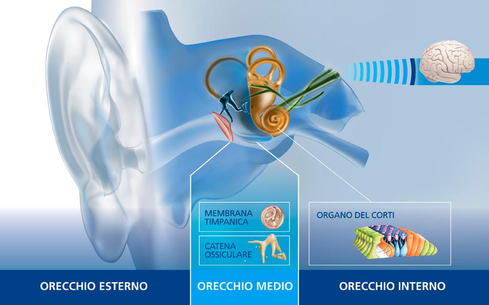 maico-anatomia-orecchio-960x600